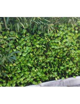 Treillis aspect feuilles de rosier JET7GARDEN